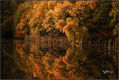 Autumn Colors On The Water. (Picture post.) Tags: landscape nature green autumn water reflections reeds paysage eau trees
