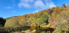 Photo of Autumn by the River Tweed