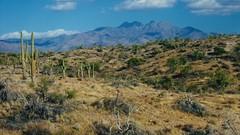 Arizona Landscape (John Rosemeyer) Tags: arizona desert saguaro cactus