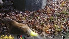 Yellow-Rumped Warbler (blazer8696) Tags: bird coronata imag6229 parulidae passeriformes rumped setophaga setophagacoronata warbler yellow yellowrumped yellowrumpedwarbler brookfield connecticut unitedstates 2019 camera ct ecw game obtusehill stumptrailrock t2019 trail trap usa