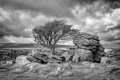 Emsworthy Rocks - Dartmoor (pm69photography.uk) Tags: bw blackandwhite devon dartmoor dartmoornationalpark atmospheric atmosphere aurorahdr2018 sonya7r3 sonya7riii southwest sigma45mmcontemporary sigma45mmf28 45mm emsworthyrocks emsworthy trees tree moody moors