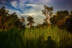 Bush @ Sunset (Markus Branse) Tags: bushsunset arnhemhighway northernterritory australia bush sunset arnhem highway northern territory abend evening tropen abendrot rot rood red roughe night sun sonnenuntergang sol wolken wetter weather australien aussie oz australie austral