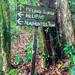 Unterwegs am Headhunters trail, Mulu Borneo