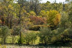 Autumn colours (SusieMSB7) Tags: autumn colours nature park