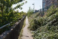 Riverside Path (SReed99342) Tags: london uk england thames river docklands path overgrown