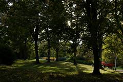 Savill Garden 30 October 2019 006 (paul_appleyard) Tags: savill garden windsor great park october 2019 sunlight trees autumn