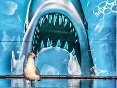 Unaware (Andy J Newman) Tags: humour color d500 nikon bird bristol humor bristoldocks harbourside seagull shark cartoon colour england unitedkingdom