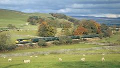 The Cracoe Jack Near Its Namesake. (Neil Harvey 156) Tags: railway 56049 cracoe rylstonebranch cracoejackrailtour railtour 1z50 class56 dutchlivery transrail grid