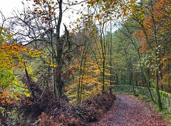"""Continuing our """"couch to 5k"""" training programme. We like this venue...it's flat (Andreadm66) Tags: autumn trees reservoir halifax ogden countrypark ogdenwater calderdale yorkshire westyorkshire iphone countryside"""