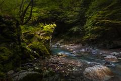 River runs thru it (Jerzy Orzechowski) Tags: trees landscape river water iyavalley green leaves stones japan plants