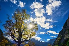 Star and Beaams (*Capture the Moment*) Tags: 2018 austria autumn backlight backlit baum eng fotowalk gegenlicht grosserahornboden herbst october oktober solitär sonya7miii sonya7m3 sonya7iii sonyfe1635mmf4zaoss sonyilce7m3 tree österreich