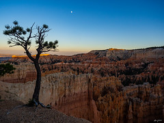 deep abyss - when falls the tree? (kleiner_eisbaer_75) Tags: bryce canyon nationalpark utah usa travel reise sonnenuntergang sunset mood stimmung abend evening natur nature