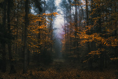 Nebulaphile IV (der_peste (on/off)) Tags: forest mist fog foggy misty trees autumn fall dark haunted lurky murky timber woods woodland