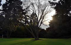Savill Garden 30 October 2019 014 (paul_appleyard) Tags: savill garden october 2019 sunlight trees autumn