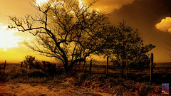 AC0222_19 (Alameda dos Canários) Tags: tree sunset outdoors sky nature silhouette scene tranquil beauty in fine art
