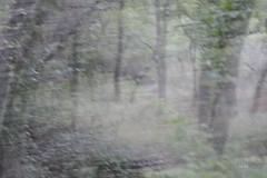 Essoufflée - Breathless (EmArt baudry) Tags: nikon nature flou blur blurry couleur colour art artnumériqueabstrait abstractdigitalart surréalisme surrealart surrealism surréalistique surrealistic artsurréel bois wood forêt forest trees arbres emart emmanuellebaudry texture pattern cameramotion mouvement movement effetbougé