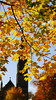 The Mall (Dee McEvoy) Tags: themall armagh ireland autumn canonrp 85mm