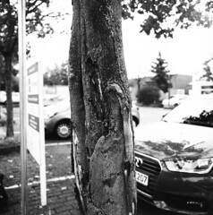 Die Wunde des Baums / abrasive wound of a tree (n0core) Tags: analog nrw düsseldorf dus bw 120 film 120film sw schwarzweiss washi schland schwarzweis filmisnotdead filmkorn filmfilmforever washifilm filmwashi pentacon rath 2a panchromatic rollfilm iia praktisix goldenrath buyfilmnotmegapixels chemicalfilm xrayfilm 6x6 analogfilm baum tree rinde