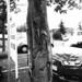 Die Wunde des Baums / abrasive wound of a tree