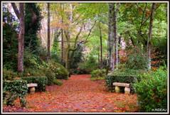 Parc des Thermes à CAMBO (Les photos de LN) Tags: parc thermes cambo nouvelleaquitaine paysage nature automne arbres allée bancs végétation couleurs teintes forêts