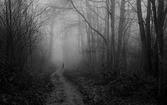 Lost (V Photography and Art) Tags: fog mist forest girl lost mood atmosphere shadows trees path autumn dark monochrome blackwhite