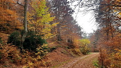 Tardor  -  Autumn (Miquel Lleixà Mora) Tags: igersmaresme 1415mobilephotographers lensculture ikaricreative natura nature life vida paisatge landscape muntanya mountain capvespre sunrise sun sol ombres shadow clouds nuvols taga