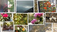 ΦΘΙΝΟΠΩΡΟ (amalia_mar) Tags: φθινόπωρο εποχή φύση μυρωδιέσ χρώματα φθινοπωρινάφύλλα φρούτα σύννεφα πρωτοβρόχια λουλούδια ψύχρα μελαγχολία fantasticmonday