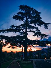 Un petit morceau de Liban en France (jeromedelaunay) Tags: