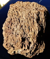 20191103 Vesicular basalt - Found on Powder Keg Ridge (lasertrimman) Tags: 20191103 vesicular basalt vesicularbasalt found powder keg ridge