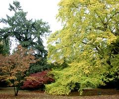 Weston Birt National Arboretum in Gloucestershire (kitmasterbloke) Tags: colour acer tree leaves autumn fall color westonbirt arboretum gloucestershire