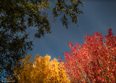 """Gareth's Photo of the Week 44 """"Green, Yellow, Red"""""""