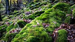 Moos_1009 (EdiSPix) Tags: unterfranken autumn tamron deutschland herbst germany canon wald faulbach edi hasloch eosr franken eos pilze bayern edispix green fall