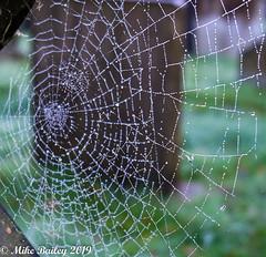 Cobwebs in the graveyard. (MWBee) Tags: fujifilm xt3 dew cobwebs gravestones graveyard stjohnschurch walton warrington cheshire mwbee