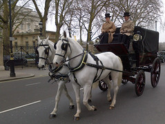 Horses and carriage outside Buckingham Palace, London. (Scott Mundy) Tags: white horses carriage royal buckingham palace westminster london geotagged