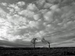 Autumn in the New Forest (auroradawn61) Tags: newforest hampshire uk england autumn fall 2019 november lumixgx80 trees blackandwhite landscape bolderwood