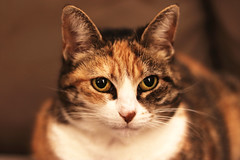(Marion . B) Tags: chat portrait felin animal