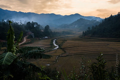 Rice Fields and Mountains (joeri-c) Tags: rice ricefield mucangchai sunset mountain river road vietnam field farm farming agriculture sun yênbái yenbai asia nikon d800 nikond800 35mm