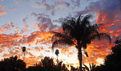 California Sunset 10-19 (inkknife_2000 (10.5 million + views)) Tags: redlandsca snow mountains dgrahamphoto usa landscapes skyandclouds inlandempire palms palmtrees sunset cloudsatsunset sunsetsky endofday