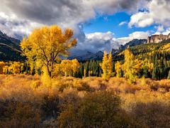 Fall color in Colorado (Eric Zumstein) Tags: colorado cimarron unitedstatesofamerica