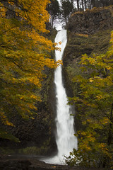 Horsetail Falls, Oregon,  in autumn (Bonnie Moreland (free images)) Tags: horsetailfalls waterfall pool autumn fall leaves basalt cliff oregon