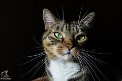 Jeu de lumière... (Mélanie Du) Tags: cat animal lumiere black pic picture photographie photography reflex nikon d5200 nikond5200 love green amazing amateur adorable beautiful beauty happy like nice new reflexd5200 watcher worldwide