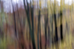 Photo of Woodland Blur