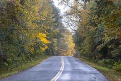 fall colors (selo0901) Tags: big marine lake mayberry trail scandia