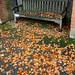 Banc de tardor / Autumn bench, Golders Hill Park, London