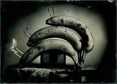 Lambada (burdesign) Tags: studio broncolor petzval ambrotype wetplate collodion largeformat bw stillife