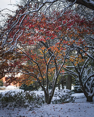 Fall in Winter (tylerjacobs) Tags: sony a6000 sigma 30mm f14 fall colors foliage midwest weather seasons