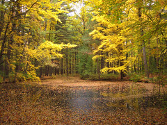 serenity (Bruces 51) Tags: whiting forest dow gardens midland michigan pond