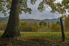 Green Pastures (mevans4272) Tags: mountains fence tree trees pastures