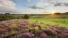 90364121 (sajadmoradimm) Tags: 2020vision countryside dawn europe flowers heather heathland heaths landscapes np plants purple reserve summer sun sunrise uk ttge منظره طبیعت گل طلوع آفتاب خورشید آسمان بنفش سبز زیبا
