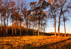Caumsett State Park 2019 (willsdad48) Tags: caumsettstatepark newyork newyorkstateparks woodlands landscape landscapephotography sunrise seascapes huntington lloydharbor longisland longislandsound travel travelphotography nikon nikonusa z6